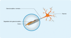 sep-axone-neurone-journeee-mondiale.png